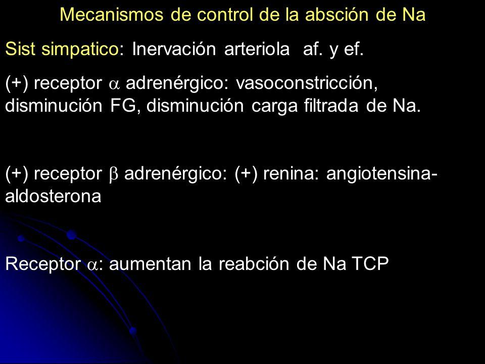 Mecanismos de control de la absción de Na Sist simpatico: Inervación arteriola af. y ef. (+) receptor adrenérgico: vasoconstricción, disminución FG, d