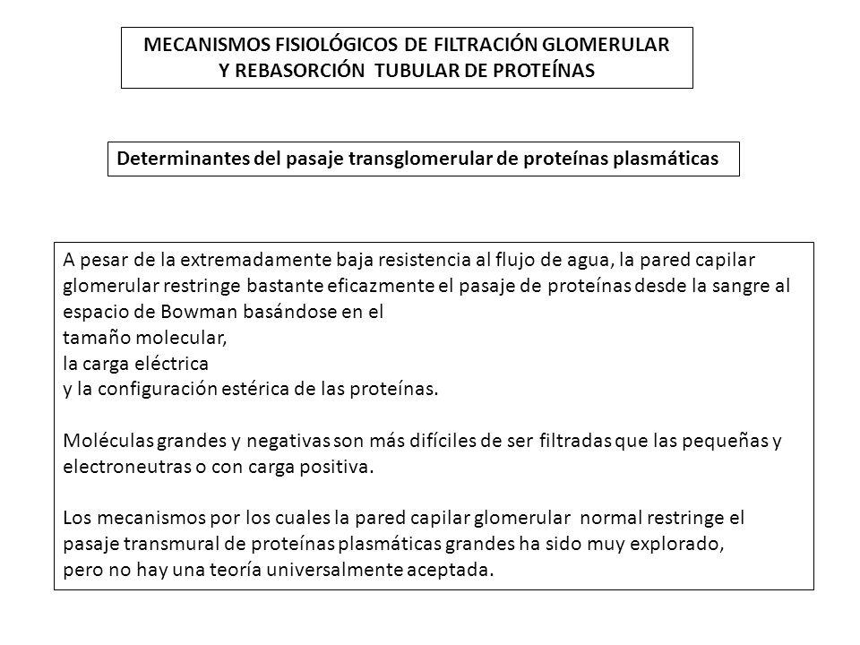 MECANISMOS FISIOLÓGICOS DE FILTRACIÓN GLOMERULAR Y REBASORCIÓN TUBULAR DE PROTEÍNAS Determinantes del pasaje transglomerular de proteínas plasmáticas
