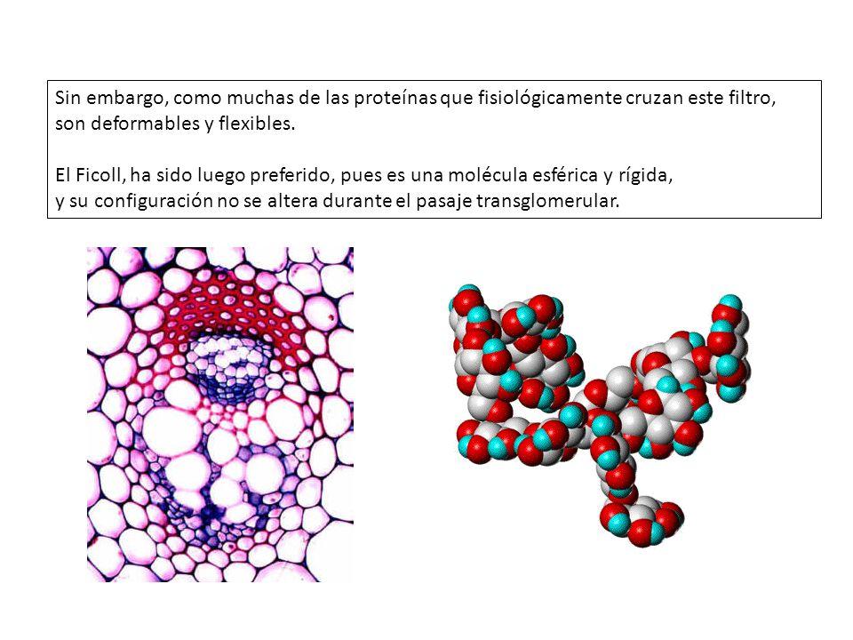 Sin embargo, como muchas de las proteínas que fisiológicamente cruzan este filtro, son deformables y flexibles. El Ficoll, ha sido luego preferido, pu