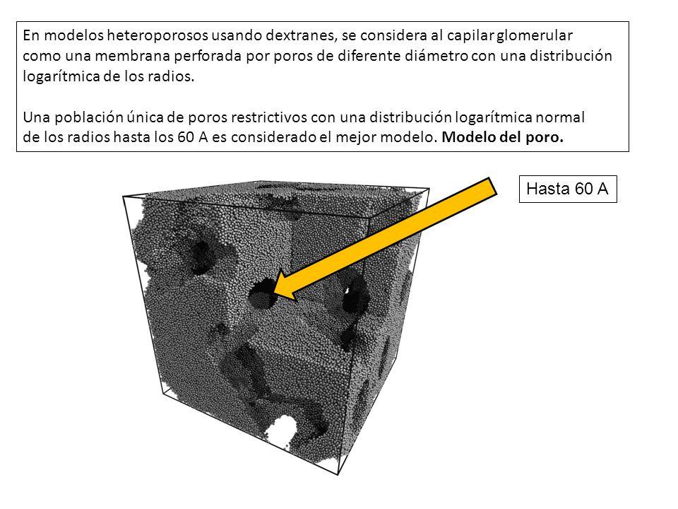 En modelos heteroporosos usando dextranes, se considera al capilar glomerular como una membrana perforada por poros de diferente diámetro con una dist