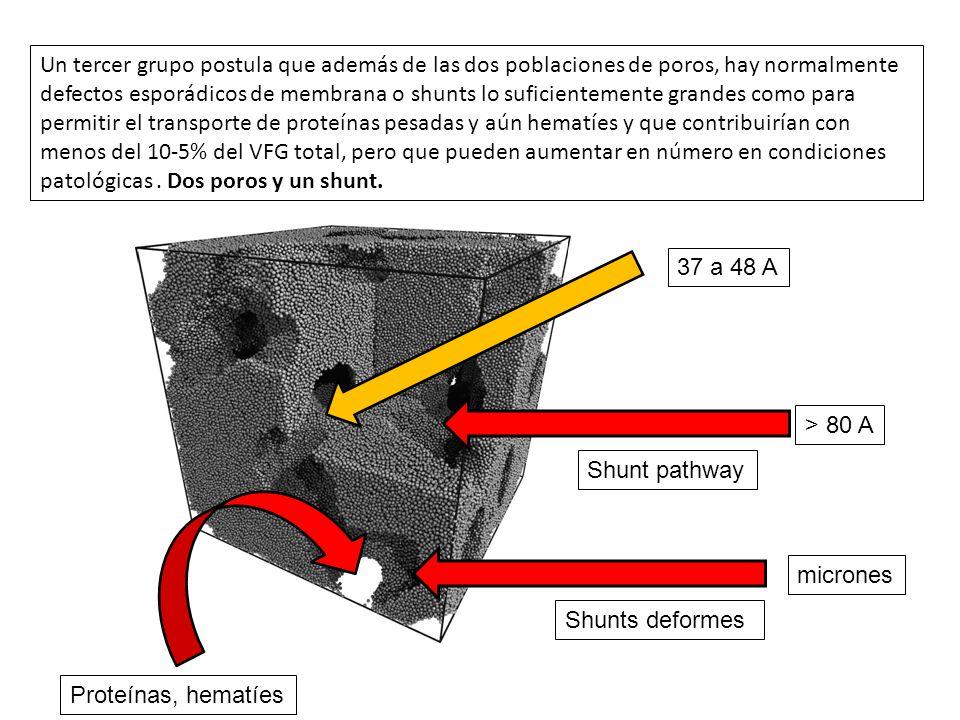 Un tercer grupo postula que además de las dos poblaciones de poros, hay normalmente defectos esporádicos de membrana o shunts lo suficientemente grand