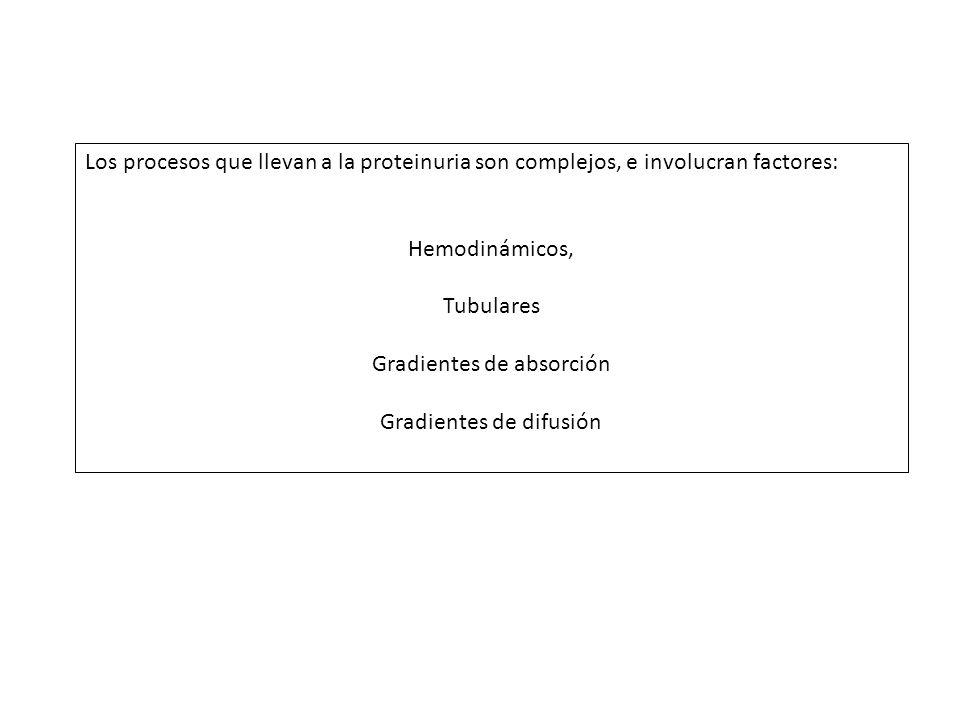 Los procesos que llevan a la proteinuria son complejos, e involucran factores: Hemodinámicos, Tubulares Gradientes de absorción Gradientes de difusión