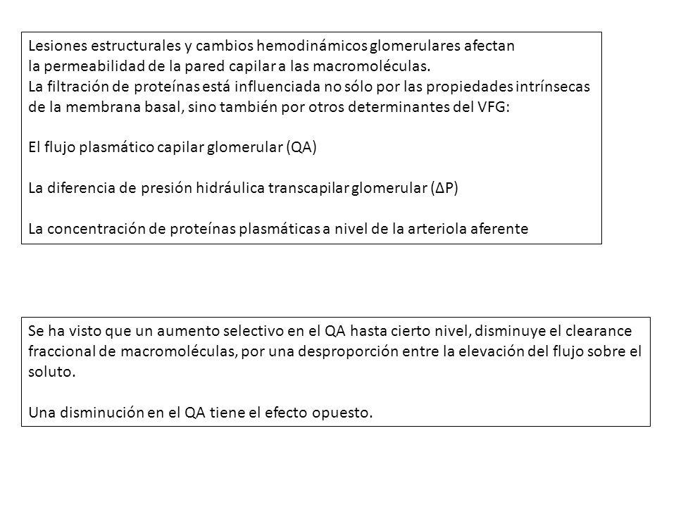 Lesiones estructurales y cambios hemodinámicos glomerulares afectan la permeabilidad de la pared capilar a las macromoléculas. La filtración de proteí