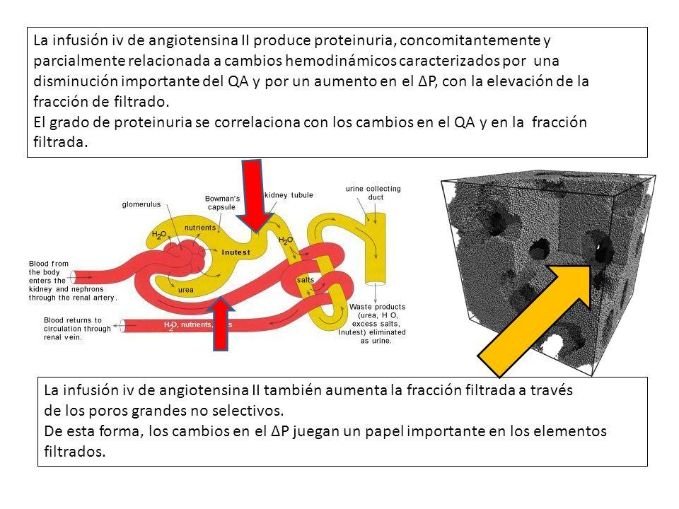 La infusión iv de angiotensina II produce proteinuria, concomitantemente y parcialmente relacionada a cambios hemodinámicos caracterizados por una dis