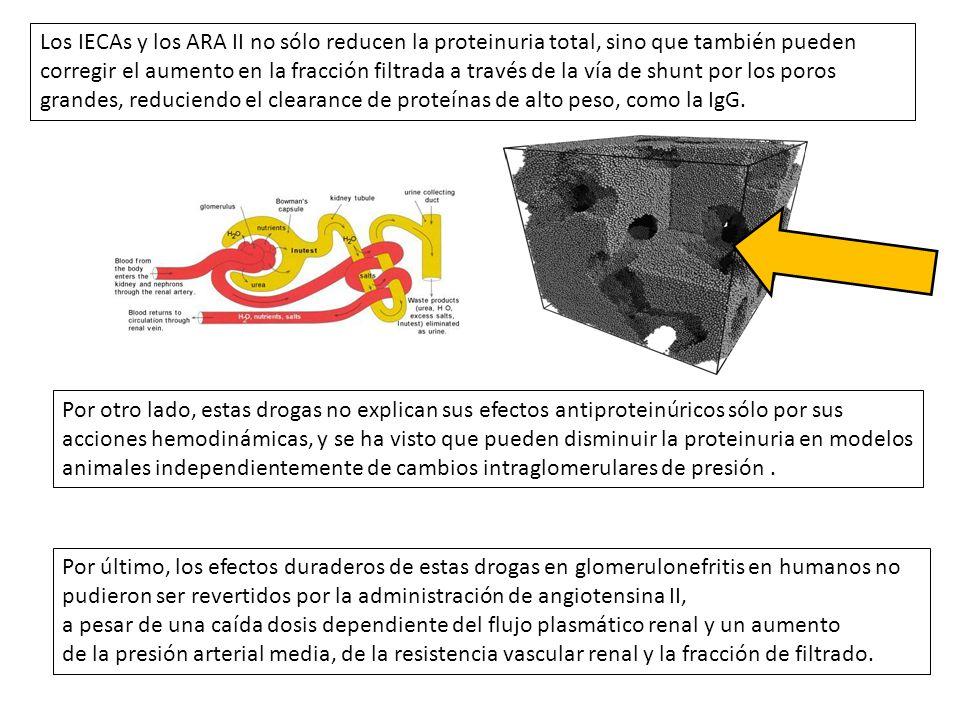Los IECAs y los ARA II no sólo reducen la proteinuria total, sino que también pueden corregir el aumento en la fracción filtrada a través de la vía de