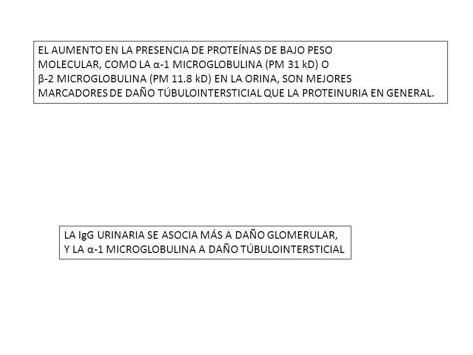 EL AUMENTO EN LA PRESENCIA DE PROTEÍNAS DE BAJO PESO MOLECULAR, COMO LA α-1 MICROGLOBULINA (PM 31 kD) O β-2 MICROGLOBULINA (PM 11.8 kD) EN LA ORINA, S