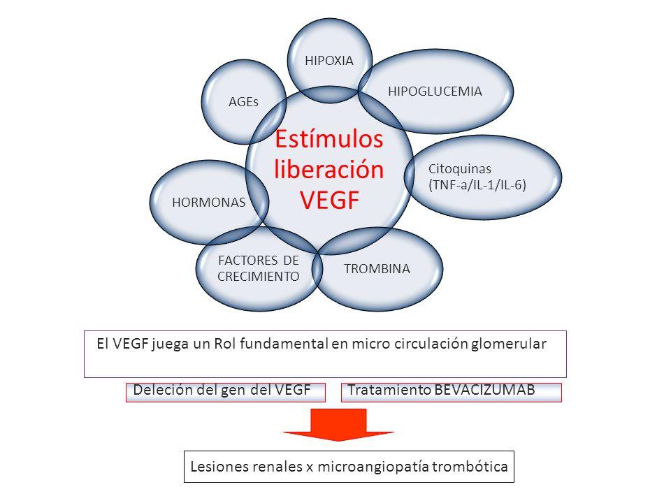 Estímulos liberación VEGF HIPOXIAHIPOGLUCEMIA Citoquinas (TNF-a/IL-1/IL-6) TROMBINA FACTORES DE CRECIMIENTO HORMONASAGEs El VEGF juega un Rol fundamen
