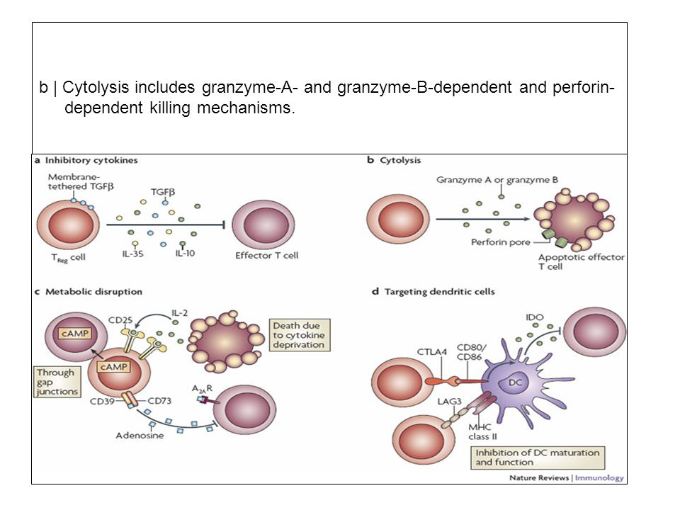 b | Cytolysis includes granzyme-A- and granzyme-B-dependent and perforin- dependent killing mechanisms. c | Metabolic disruption includes high-affinit