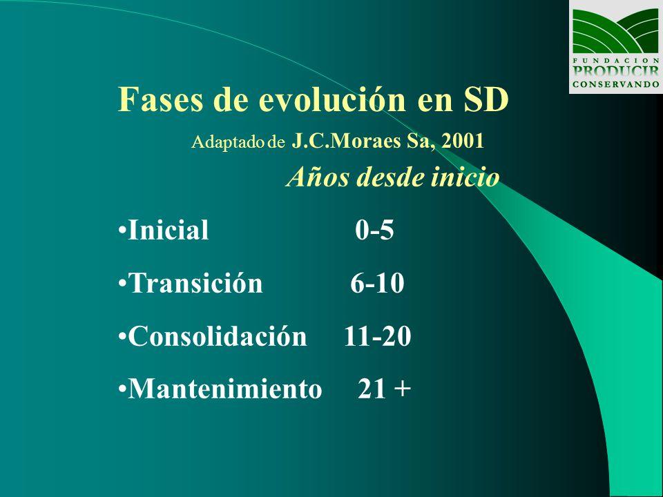 Fases de evolución en SD Adaptado de J.C.Moraes Sa, 2001 Años desde inicio Inicial 0-5 Transición 6-10 Consolidación 11-20 Mantenimiento 21 +