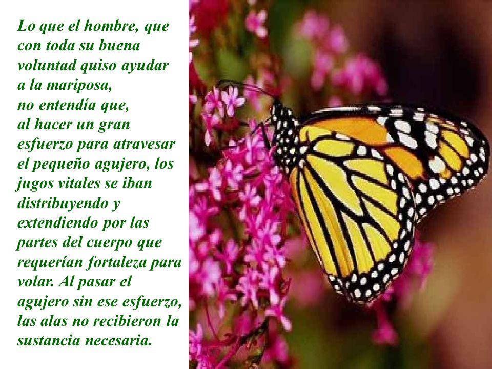 Pero nada sucedió. La verdad es que la mariposa pasó toda la vida arrastrándose por el suelo. Fue incapaz de elevar el vuelo.