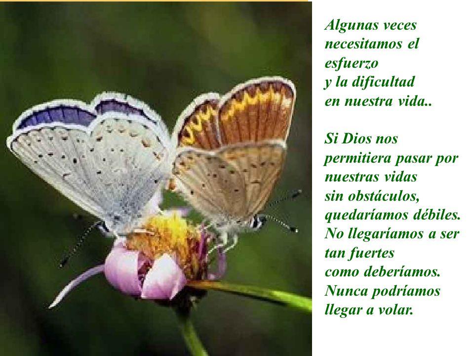 Lo que el hombre, que con toda su buena voluntad quiso ayudar a la mariposa, no entendía que, al hacer un gran esfuerzo para atravesar el pequeño aguj