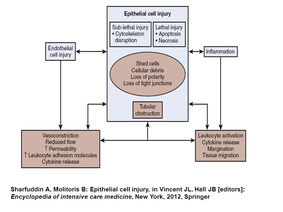 Sharfuddin A, Molitoris B: Epithelial cell injury, in Vincent JL, Hall JB [editors]: Encyclopedia of intensive care medicine, New York, 2012, Springer