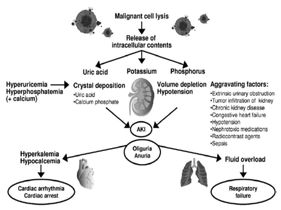 Tratamiento 1)Discontinuar nefrotoxicos (IECAS, ARA II, AINEs, Inhibidores de la Renina, Diureticos ahorradores de K, Suplementos de K, Contraste iodado, Contraste con Gadolineo).