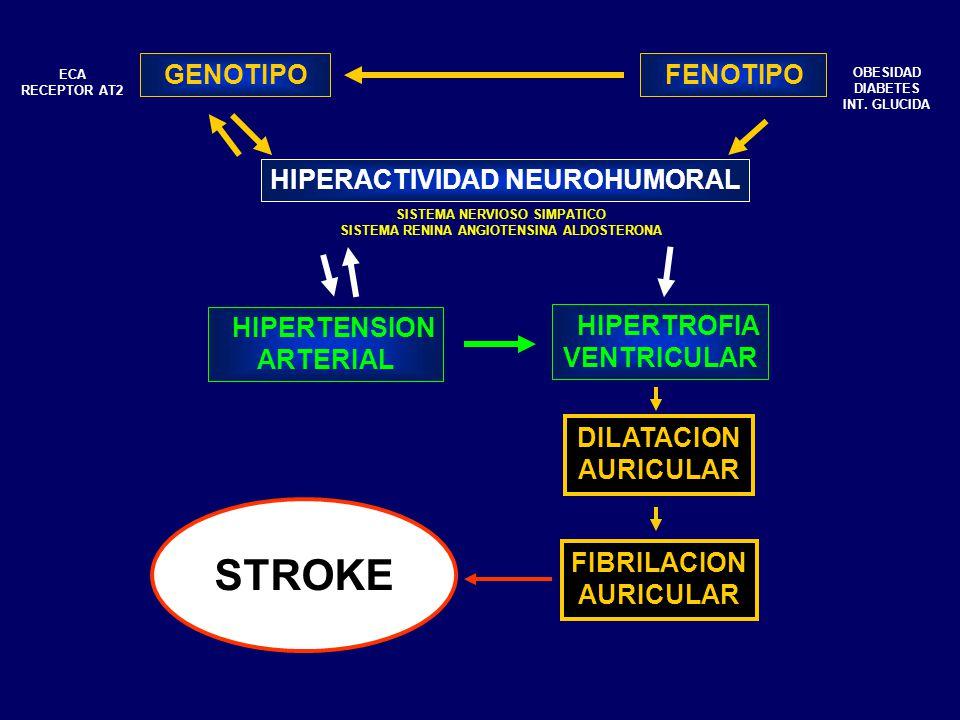 HIPERACTIVIDAD NEUROHUMORAL GENOTIPO FENOTIPO HIPERTENSION ARTERIAL HIPERTROFIA VENTRICULAR OBESIDAD DIABETES INT. GLUCIDA SISTEMA NERVIOSO SIMPATICO