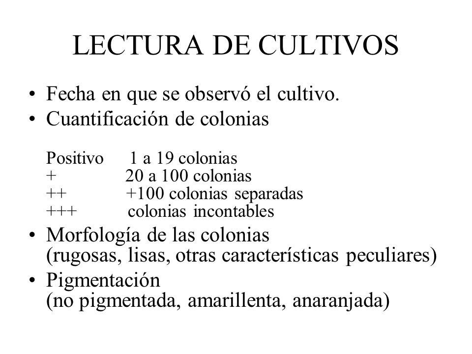 LECTURA DE CULTIVOS Fecha en que se observó el cultivo. Cuantificación de colonias Positivo 1 a 19 colonias + 20 a 100 colonias ++ +100 colonias separ