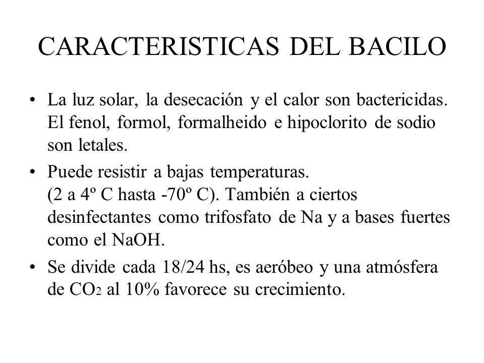 CARACTERISTICAS DEL BACILO La luz solar, la desecación y el calor son bactericidas. El fenol, formol, formalheido e hipoclorito de sodio son letales.