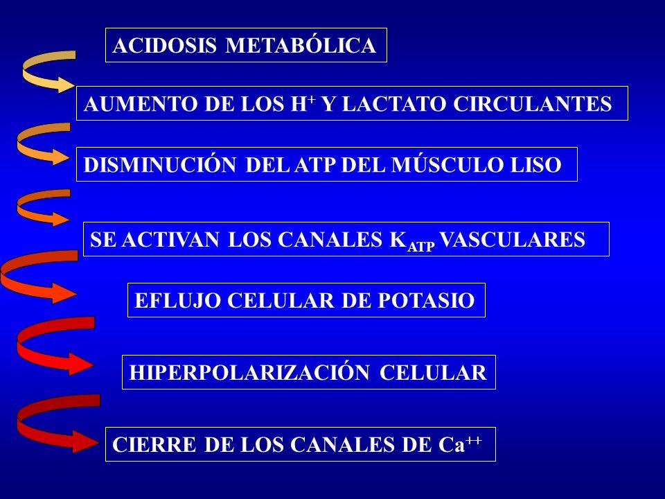 ACIDOSIS METABÓLICA AUMENTO DE LOS H + Y LACTATO CIRCULANTES DISMINUCIÓN DEL ATP DEL MÚSCULO LISO SE ACTIVAN LOS CANALES K ATP VASCULARES EFLUJO CELUL