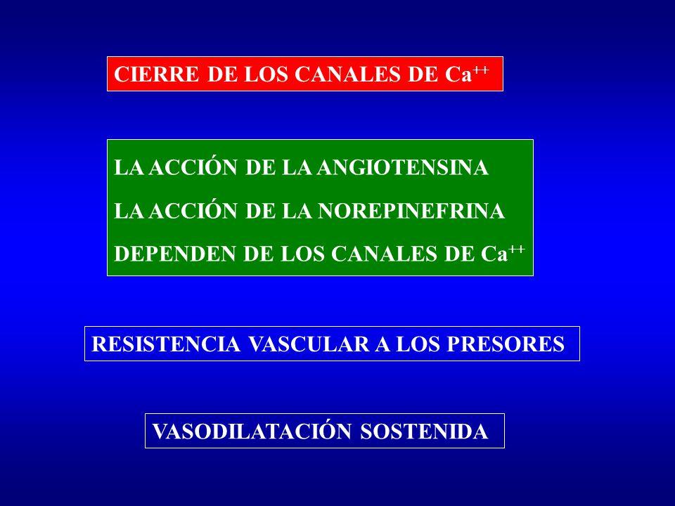 LA ACCIÓN DE LA ANGIOTENSINA LA ACCIÓN DE LA NOREPINEFRINA DEPENDEN DE LOS CANALES DE Ca ++ RESISTENCIA VASCULAR A LOS PRESORES VASODILATACIÓN SOSTENI