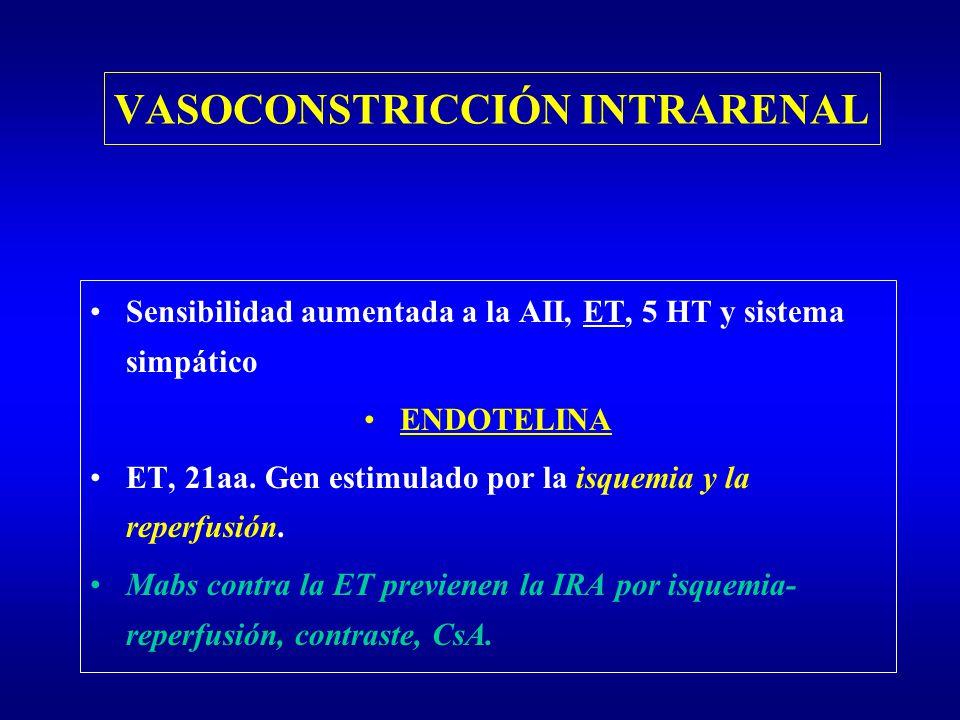 VASOCONSTRICCIÓN INTRARENAL Sensibilidad aumentada a la AII, ET, 5 HT y sistema simpático ENDOTELINA ET, 21aa. Gen estimulado por la isquemia y la rep