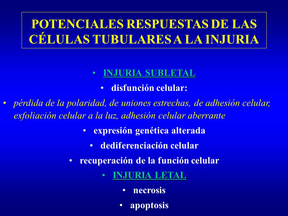POTENCIALES RESPUESTAS DE LAS CÉLULAS TUBULARES A LA INJURIA INJURIA SUBLETALINJURIA SUBLETAL disfunción celular: pérdida de la polaridad, de uniones