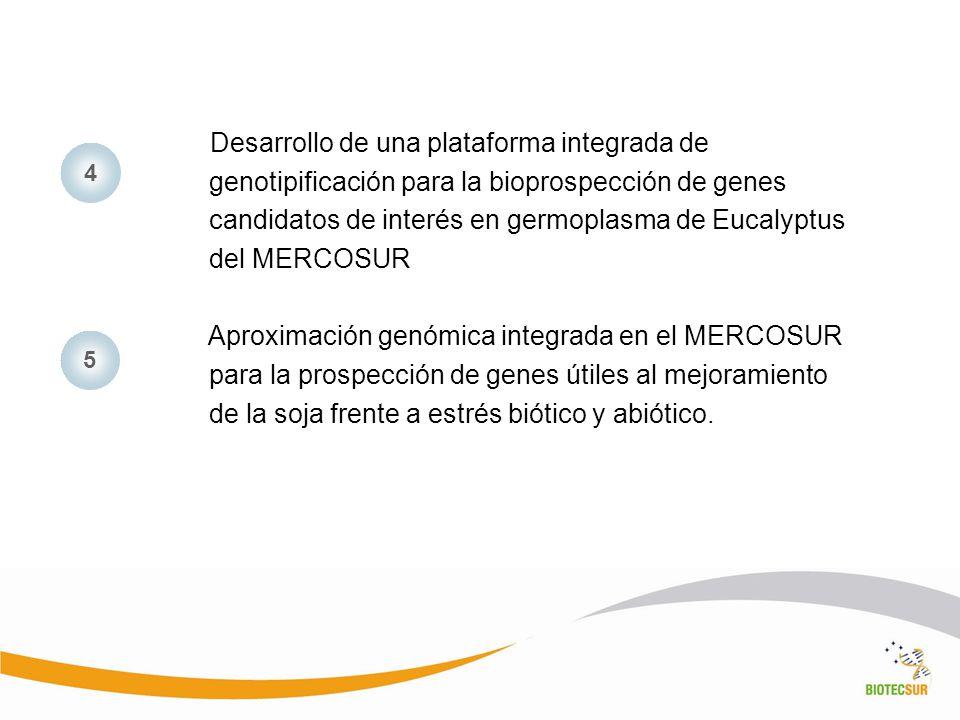 Desarrollo de una plataforma integrada de genotipificación para la bioprospección de genes candidatos de interés en germoplasma de Eucalyptus del MERC