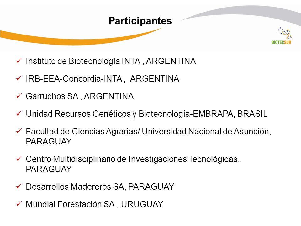 Instituto de Biotecnología INTA, ARGENTINA IRB-EEA-Concordia-INTA, ARGENTINA Garruchos SA, ARGENTINA Unidad Recursos Genéticos y Biotecnología-EMBRAPA, BRASIL Facultad de Ciencias Agrarias/ Universidad Nacional de Asunción, PARAGUAY Centro Multidisciplinario de Investigaciones Tecnológicas, PARAGUAY Desarrollos Madereros SA, PARAGUAY Mundial Forestación SA, URUGUAY Participantes