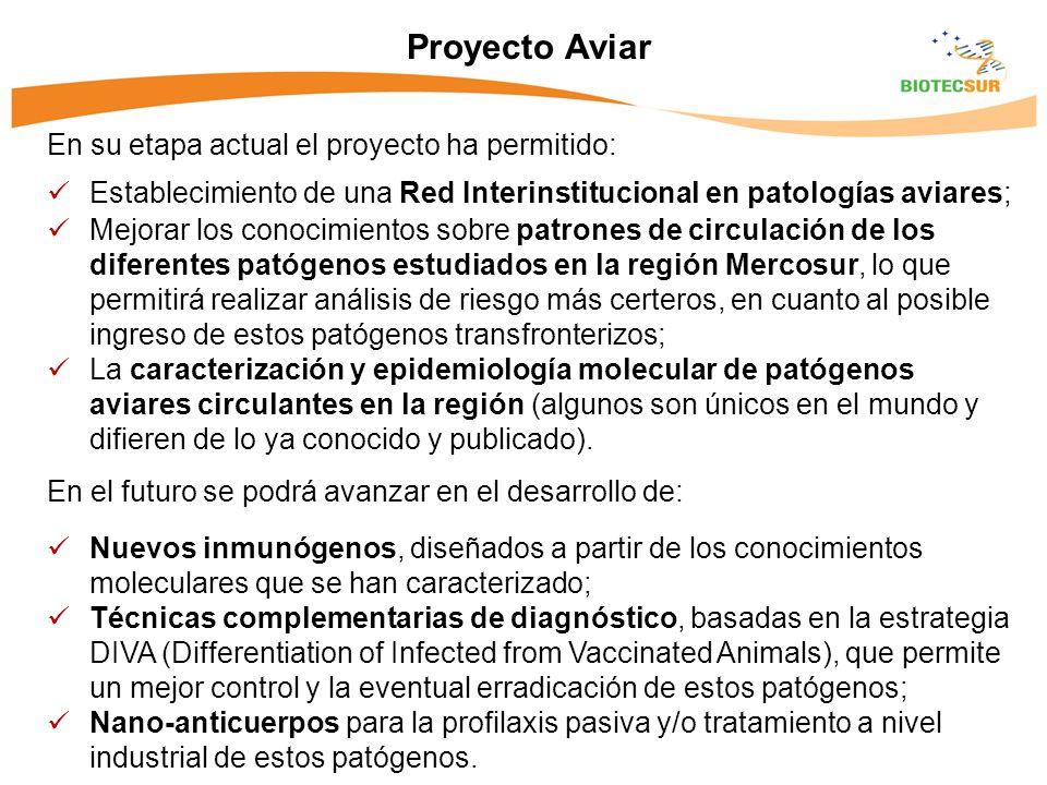 Proyecto Aviar En su etapa actual el proyecto ha permitido: Establecimiento de una Red Interinstitucional en patologías aviares; Mejorar los conocimie