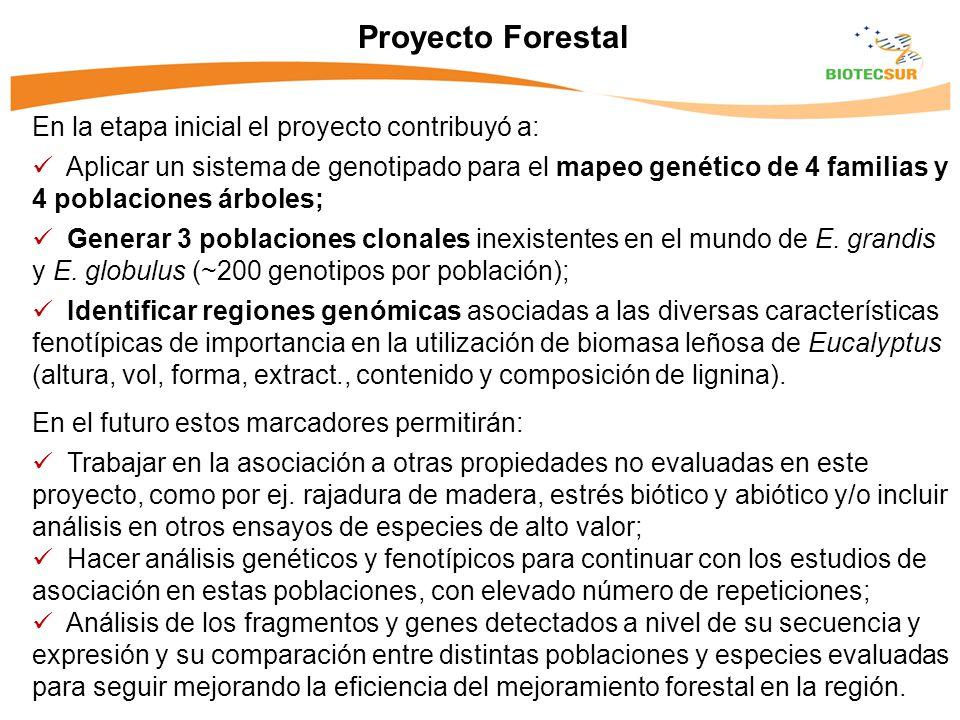 Proyecto Forestal En la etapa inicial el proyecto contribuyó a: Aplicar un sistema de genotipado para el mapeo genético de 4 familias y 4 poblaciones árboles; Generar 3 poblaciones clonales inexistentes en el mundo de E.