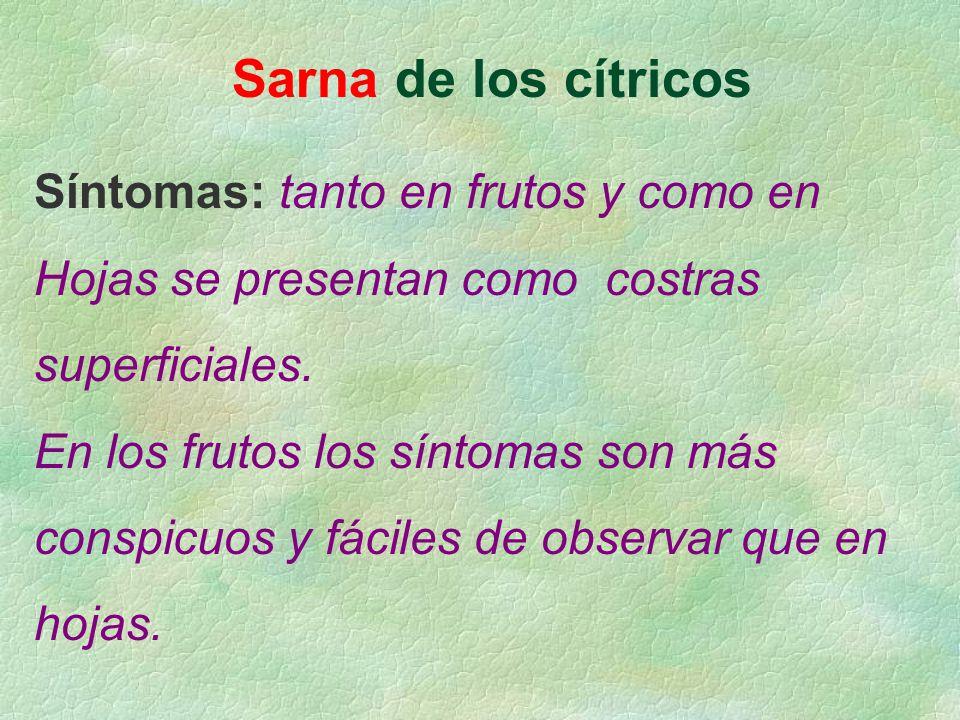 Sarna de los cítricos Síntomas: tanto en frutos y como en Hojas se presentan como costras superficiales. En los frutos los síntomas son más conspicuos