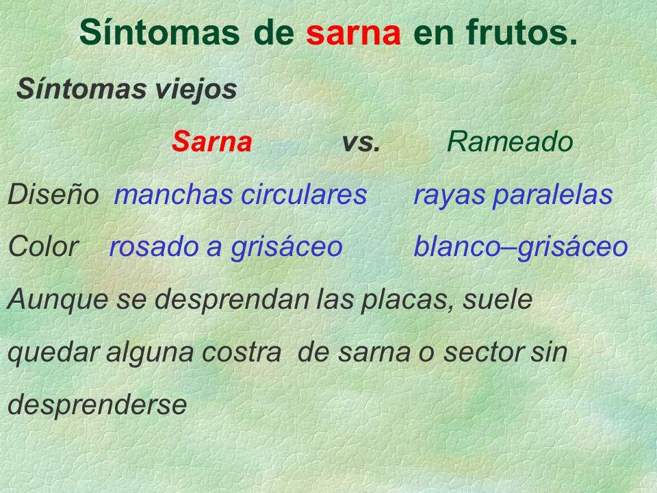 Síntomas de sarna en frutos. Síntomas viejos Sarna vs. Rameado Diseño manchas circulares rayas paralelas Color rosado a grisáceo blanco–grisáceo Aunqu