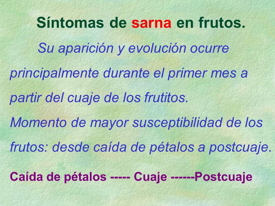 Síntomas de sarna en frutos. Su aparición y evolución ocurre principalmente durante el primer mes a partir del cuaje de los frutitos. Momento de mayor