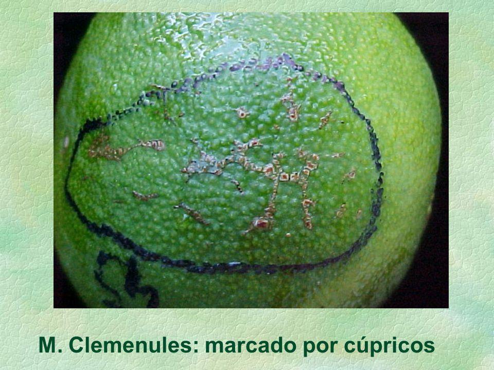 M. Clemenules: marcado por cúpricos