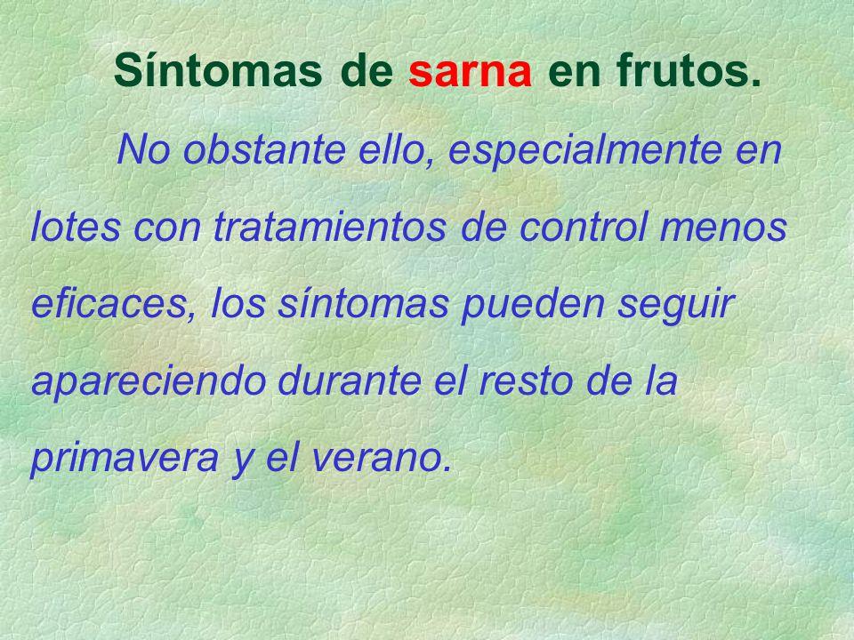 Síntomas de sarna en frutos. No obstante ello, especialmente en lotes con tratamientos de control menos eficaces, los síntomas pueden seguir aparecien