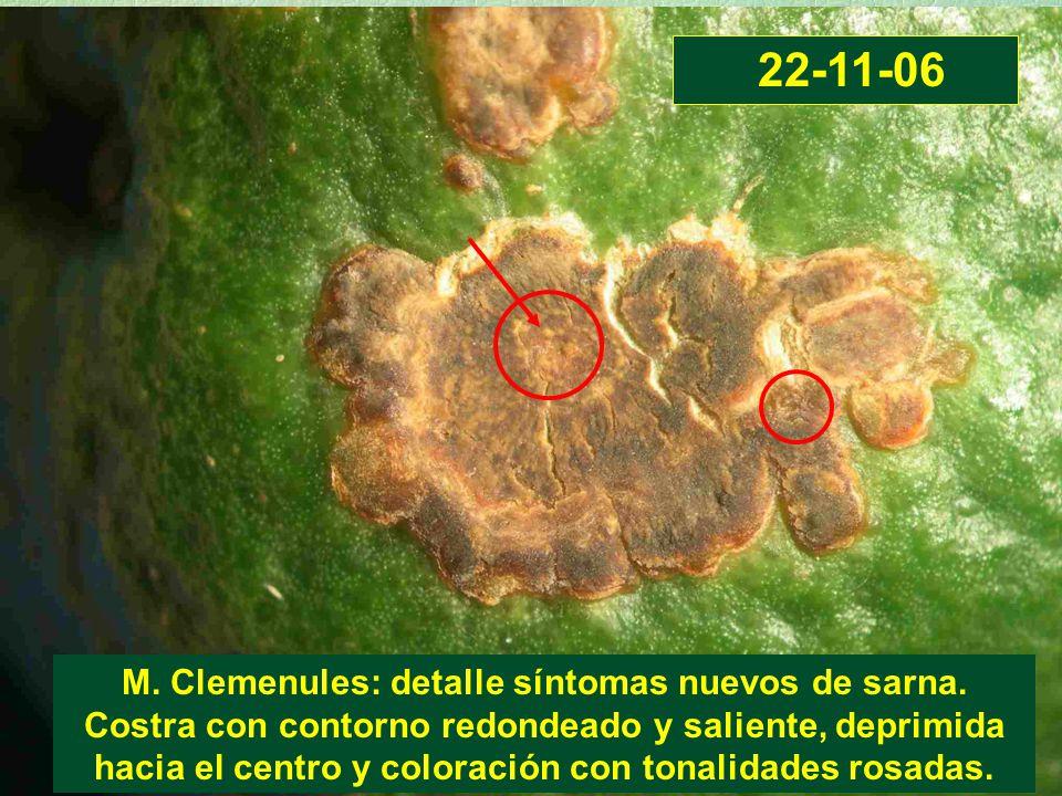 M. Clemenules: detalle síntomas nuevos de sarna. Costra con contorno redondeado y saliente, deprimida hacia el centro y coloración con tonalidades ros
