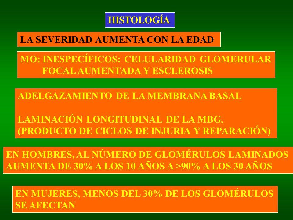 HISTOLOGÍA LA SEVERIDAD AUMENTA CON LA EDAD ADELGAZAMIENTO DE LA MEMBRANA BASAL LAMINACIÓN LONGITUDINAL DE LA MBG, (PRODUCTO DE CICLOS DE INJURIA Y RE
