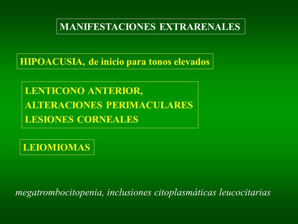 MANIFESTACIONES EXTRARENALES HIPOACUSIA, de inicio para tonos elevados LENTICONO ANTERIOR, ALTERACIONES PERIMACULARES LESIONES CORNEALES LEIOMIOMAS megatrombocitopenia, inclusiones citoplasmáticas leucocitarias