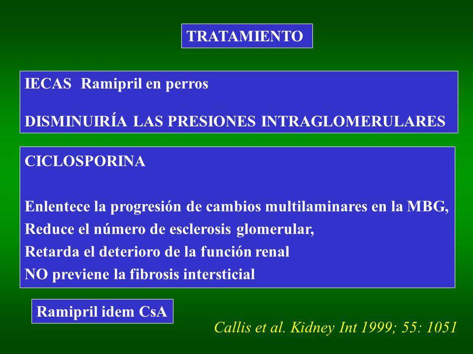 TRATAMIENTO IECAS Ramipril en perros DISMINUIRÍA LAS PRESIONES INTRAGLOMERULARES CICLOSPORINA Enlentece la progresión de cambios multilaminares en la MBG, Reduce el número de esclerosis glomerular, Retarda el deterioro de la función renal NO previene la fibrosis intersticial Callis et al.