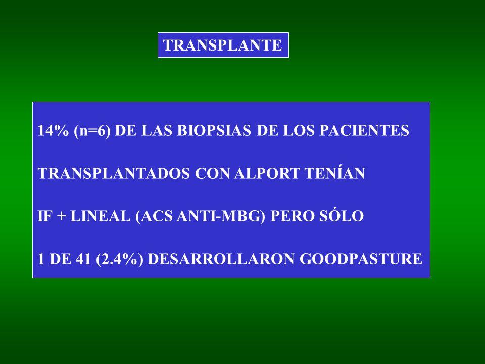 TRANSPLANTE 14% (n=6) DE LAS BIOPSIAS DE LOS PACIENTES TRANSPLANTADOS CON ALPORT TENÍAN IF + LINEAL (ACS ANTI-MBG) PERO SÓLO 1 DE 41 (2.4%) DESARROLLARON GOODPASTURE