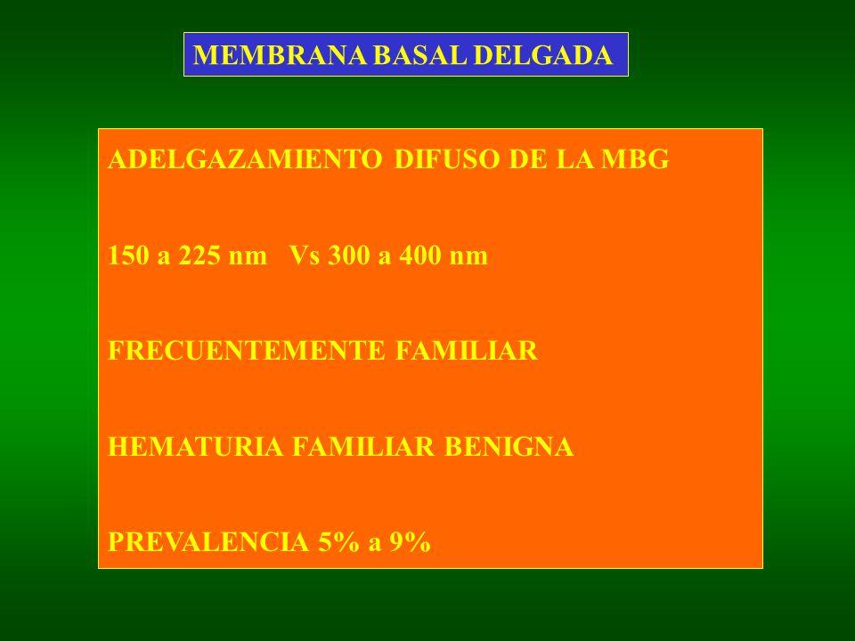ADELGAZAMIENTO DIFUSO DE LA MBG 150 a 225 nm Vs 300 a 400 nm FRECUENTEMENTE FAMILIAR HEMATURIA FAMILIAR BENIGNA PREVALENCIA 5% a 9%