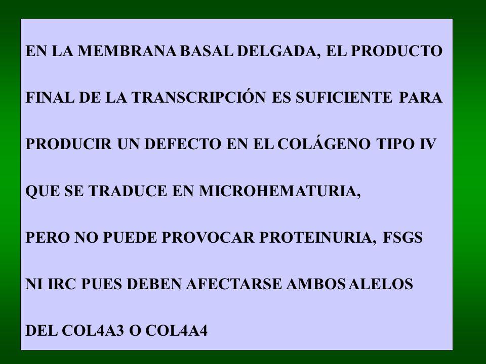 EN LA MEMBRANA BASAL DELGADA, EL PRODUCTO FINAL DE LA TRANSCRIPCIÓN ES SUFICIENTE PARA PRODUCIR UN DEFECTO EN EL COLÁGENO TIPO IV QUE SE TRADUCE EN MICROHEMATURIA, PERO NO PUEDE PROVOCAR PROTEINURIA, FSGS NI IRC PUES DEBEN AFECTARSE AMBOS ALELOS DEL COL4A3 O COL4A4
