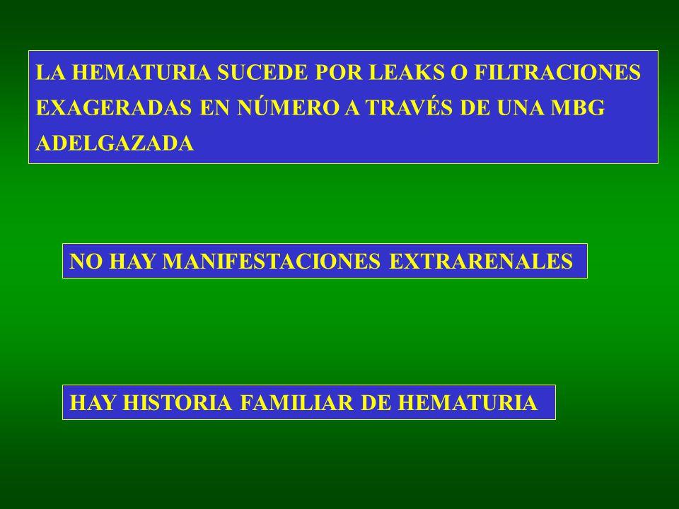 LA HEMATURIA SUCEDE POR LEAKS O FILTRACIONES EXAGERADAS EN NÚMERO A TRAVÉS DE UNA MBG ADELGAZADA NO HAY MANIFESTACIONES EXTRARENALES HAY HISTORIA FAMILIAR DE HEMATURIA