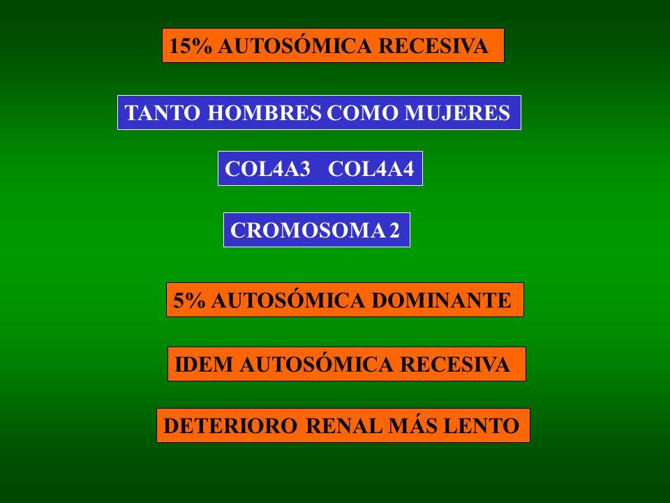 15% AUTOSÓMICA RECESIVA TANTO HOMBRES COMO MUJERES COL4A3 COL4A4 CROMOSOMA 2 5% AUTOSÓMICA DOMINANTE IDEM AUTOSÓMICA RECESIVA DETERIORO RENAL MÁS LENT