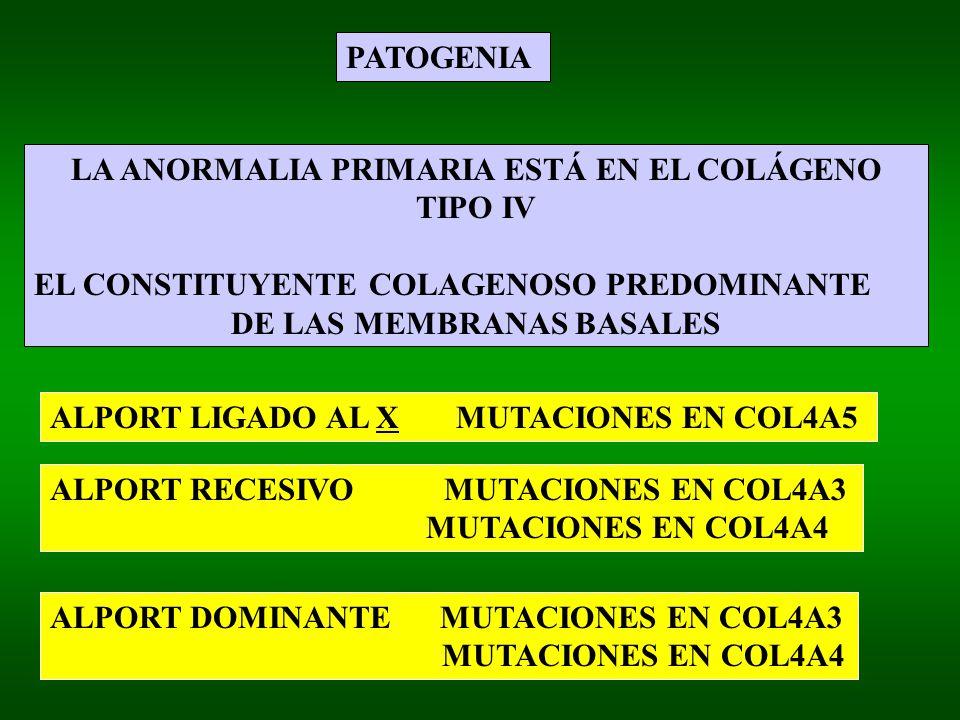 PATOGENIA LA ANORMALIA PRIMARIA ESTÁ EN EL COLÁGENO TIPO IV EL CONSTITUYENTE COLAGENOSO PREDOMINANTE DE LAS MEMBRANAS BASALES ALPORT LIGADO AL X MUTACIONES EN COL4A5 ALPORT RECESIVO MUTACIONES EN COL4A3 MUTACIONES EN COL4A4 ALPORT DOMINANTE MUTACIONES EN COL4A3 MUTACIONES EN COL4A4