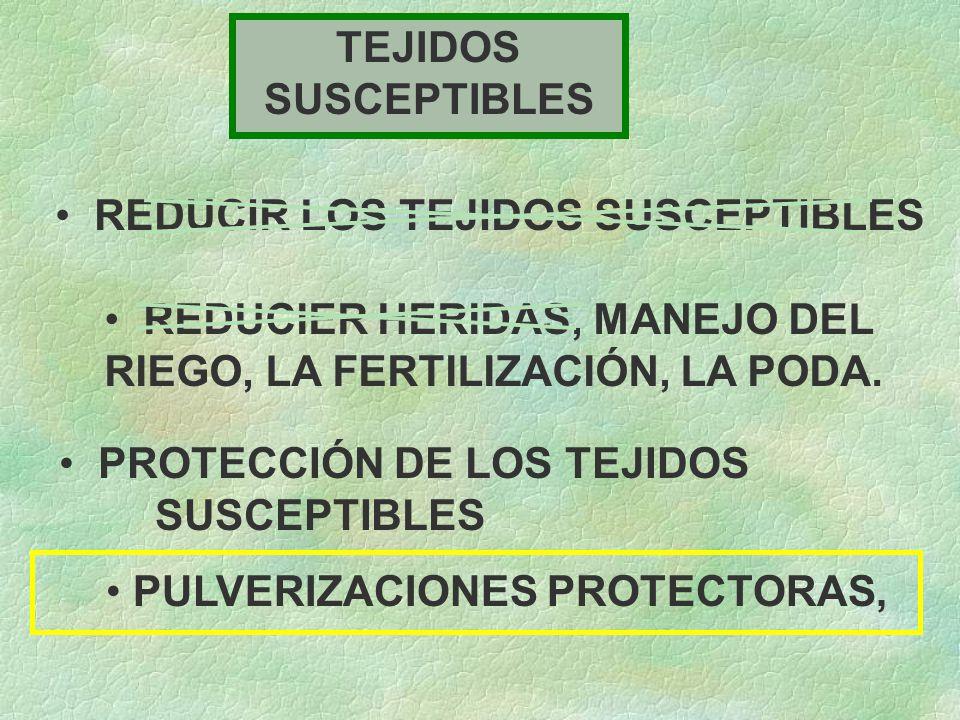TEJIDOS SUSCEPTIBLES REDUCIR LOS TEJIDOS SUSCEPTIBLES REDUCIER HERIDAS, MANEJO DEL RIEGO, LA FERTILIZACIÓN, LA PODA.