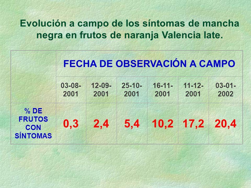 Evolución a campo de los síntomas de mancha negra en frutos de naranja Valencia late.