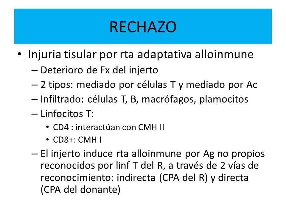 RECHAZO Injuria tisular por rta adaptativa alloinmune – Deterioro de Fx del injerto – 2 tipos: mediado por células T y mediado por Ac – Infiltrado: células T, B, macrófagos, plamocitos – Linfocitos T: CD4 : interactúan con CMH II CD8+: CMH I – El injerto induce rta alloinmune por Ag no propios reconocidos por linf T del R, a través de 2 vías de reconocimiento: indirecta (CPA del R) y directa (CPA del donante)