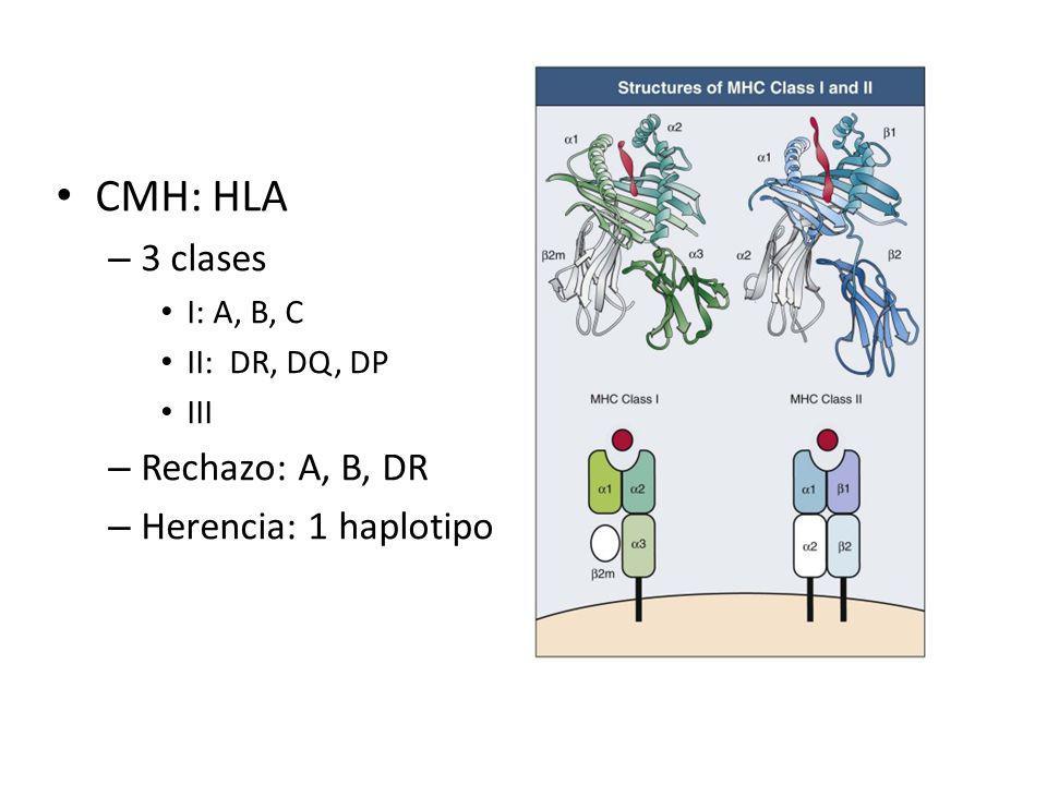 CMH: HLA – 3 clases I: A, B, C II: DR, DQ, DP III – Rechazo: A, B, DR – Herencia: 1 haplotipo