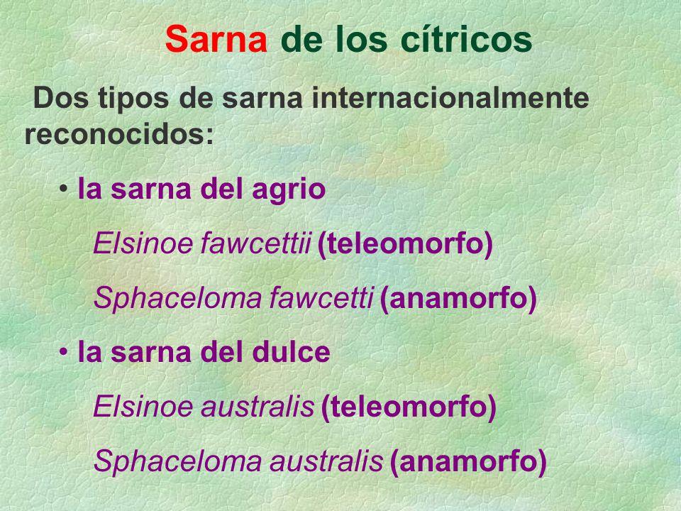 Sarna de los cítricos Dos tipos de sarna internacionalmente reconocidos: la sarna del agrio Elsinoe fawcettii (teleomorfo) Sphaceloma fawcetti (anamor