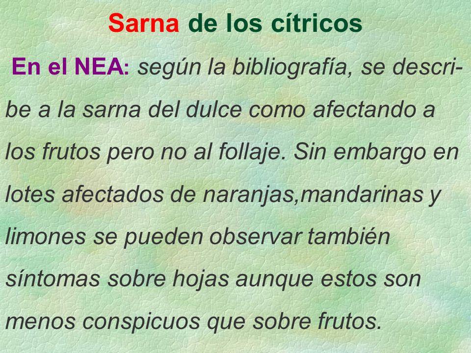 Sarna de los cítricos En el NEA : según la bibliografía, se descri- be a la sarna del dulce como afectando a los frutos pero no al follaje. Sin embarg