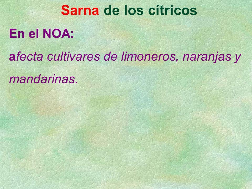 Sarna de los cítricos En el NOA: afecta cultivares de limoneros, naranjas y mandarinas.